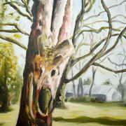 Botanic Gardens Tree