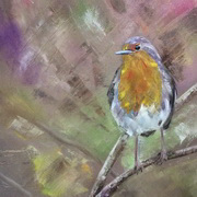 Jewelled Robin
