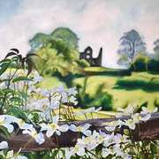 Clematis In Bloom (From the Mill house to the old ruins of Fennor Castle,Slane,Co. Meath)