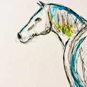 Equine Study