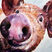 Curious Piggy