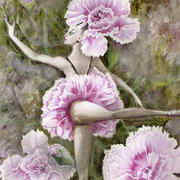 Dianthus Dance