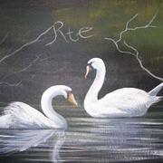 Cleggan Swans
