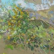 Pear tree and gorse bush in bloom