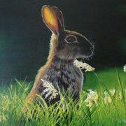 Hare at Dawn