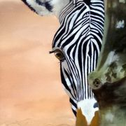 Peekaboo 1 Zebra
