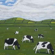 Fresian Cattle