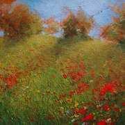 Sunlit poppy field
