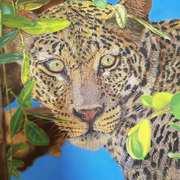 Female Leopard of Ruaha