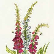Foxgloves and bees