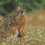 Hare n Meadow