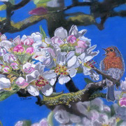 Robin With Apple Blossom