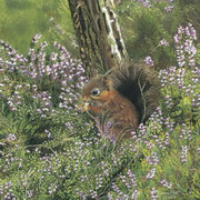 Squirrel With Heathers