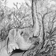 Elephant in Dublin Zoo