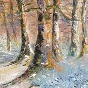Bluebells Woodland
