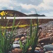 Wild Iris Achill Island