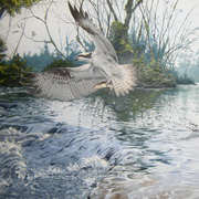 The Liffey Hawk
