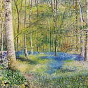 Carpet of Bluebells In Jenkinstown Wood