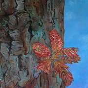 Red Oak In Wicklow