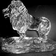 Lion finished 5