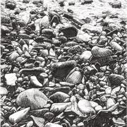 Pebbles On The Beach Near Raughley