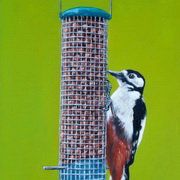 Irish Woodpecker