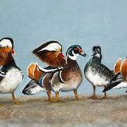 Mandarin and Wood Duck