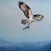 Osprey-An Coimeach