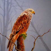 Red Kite - Cur Rua