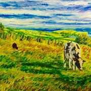 Grazing herd, Ballymoney Townland, Islandmagee, County Antrim