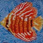 Happy Fish - Orange Beauty