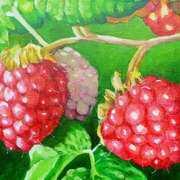 Rasberry Drupelets