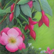 A Wild Rose Among The Fuchsias