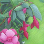 Red Fuchsias