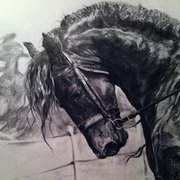 Irish Art, Sander (friesian Stalion),