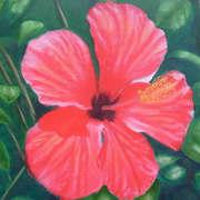 Hibiscus - Crete