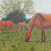 Street Meadow Horses