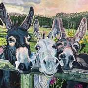 Curious Donkeys