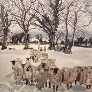 Wexford Sheep In The Snow