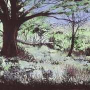 Forest Glade, Killarney 2