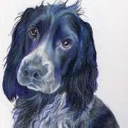 Blue Roan Spaniel