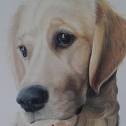 Buster,Polychromos