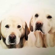 Labrador Twins