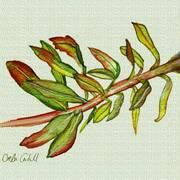 Leafy Stem