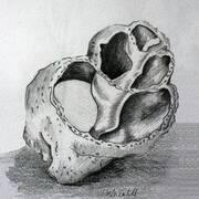 Shell No.1