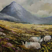 Sheep below Errigal Co. Donegal