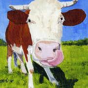 Cows Lick 1