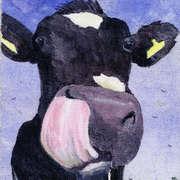 Cows Lick 2