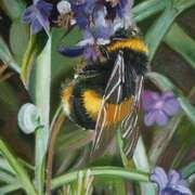 Bumblebee no. 1