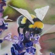 Bumblebee no. 2